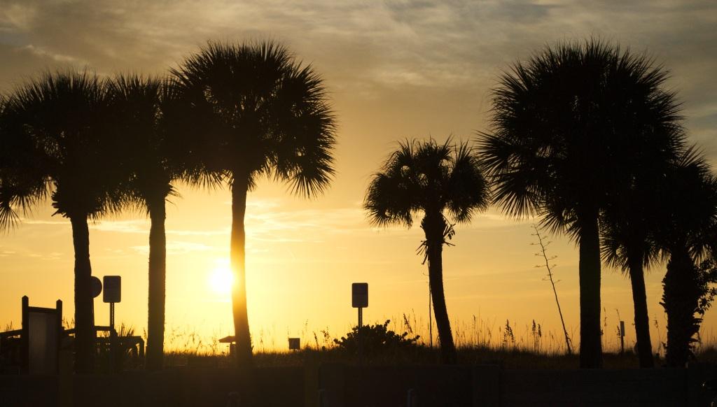 Palm_tree_silhouette_1