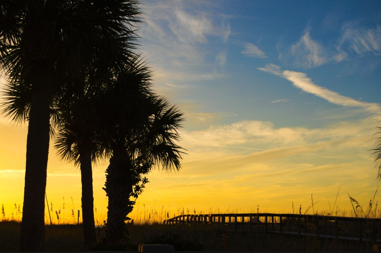 Palm trees silhouetted against the sunset over St Pete Beach.