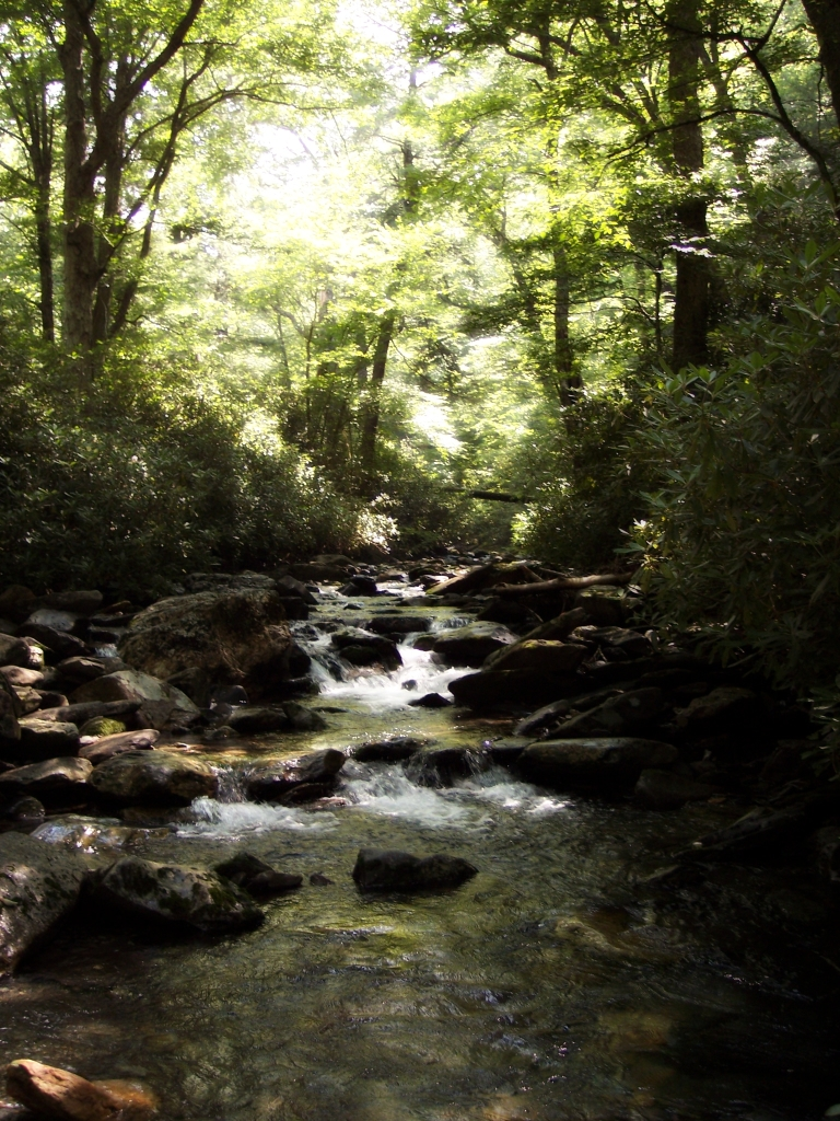 Stream_in_the_Smokies